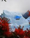 eisberg-mit-herz-im-lago-grey-und-notro-buesche