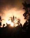 palmen im sonnenaufgang