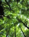 Grün gen Himmel