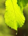 Grün im Regen