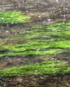 gruen-der-isar